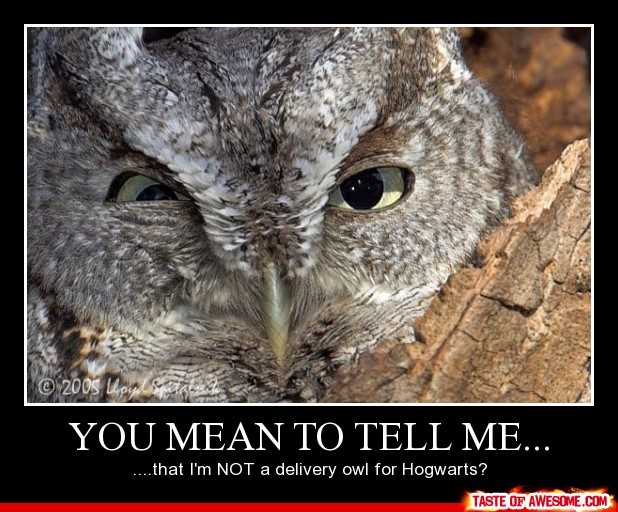 I Am Not A Delivery Owl For Hogwarts Funny Mean Poster