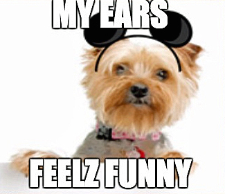 31 Very Funny Ear Photos And Images