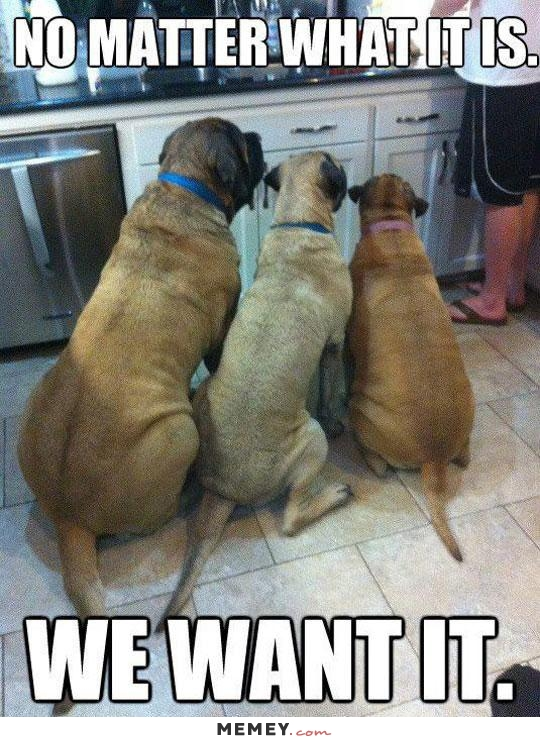 No Matter What It Is We Want It Funny Hungry Dog Meme 15 funny hungry pictures and photos