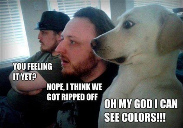 23 Most Funny Drug Images And Photos