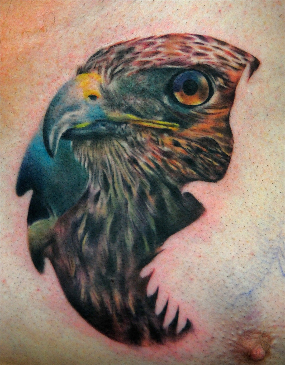 11 Hawk Tattoo Images Pictures And Ideas
