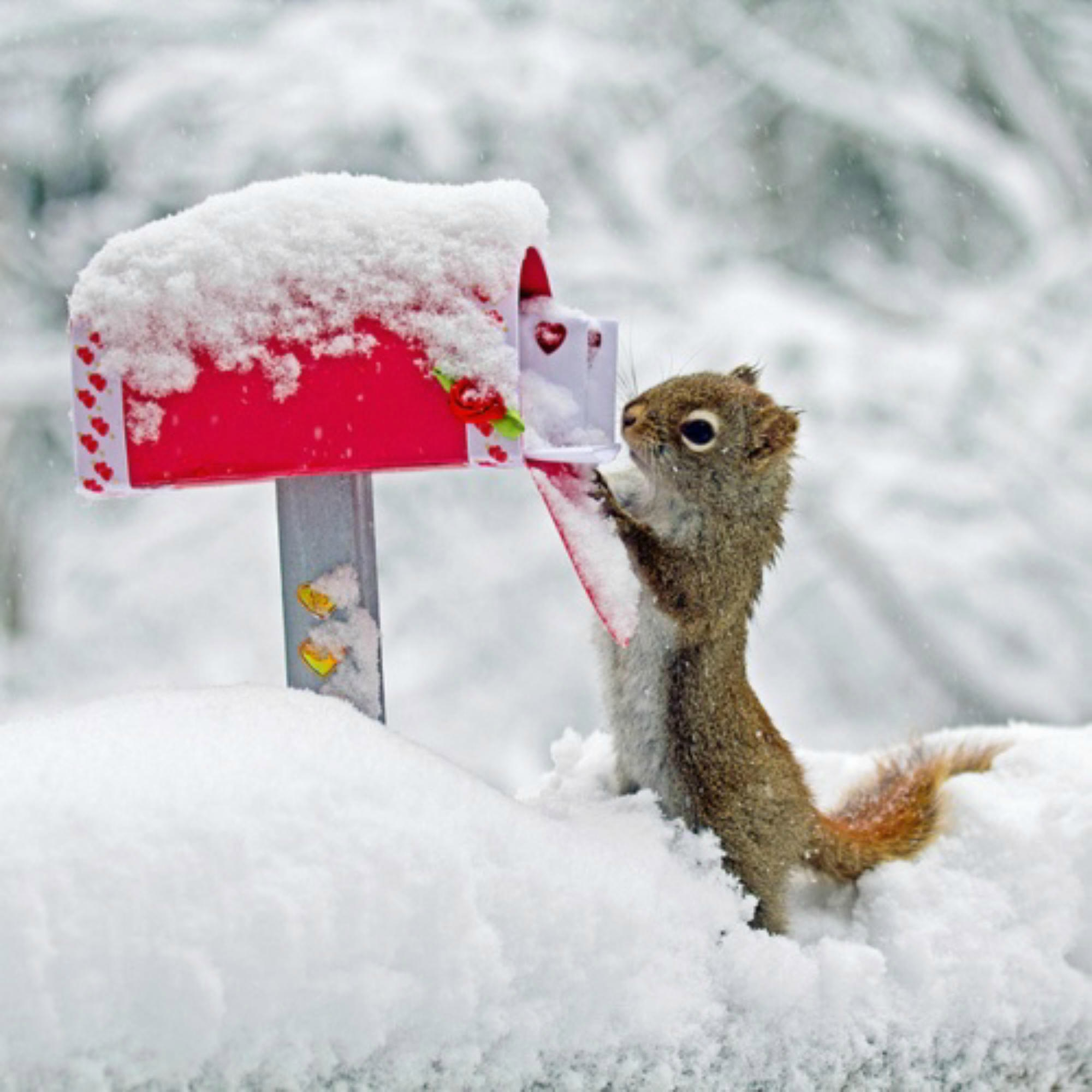 30 Very Funny Squirrel Pictures