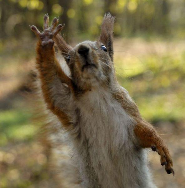 La Grande MAJ Suqirrel-Say-Good-Bye-Funny-Picture
