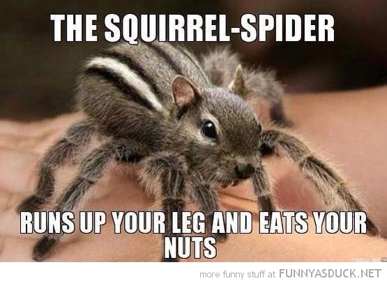 The-Squirrel-Spider-Funny-Meme.jpg
