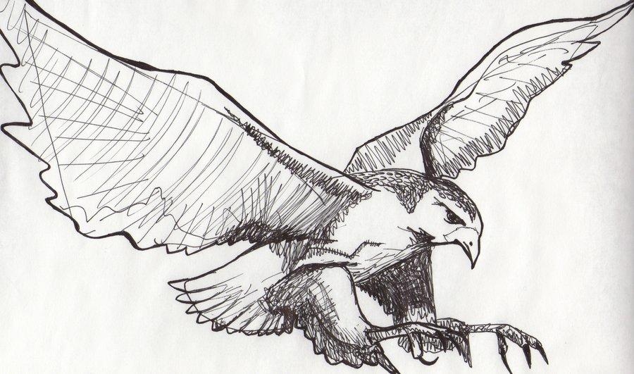 flying falcon drawing - 900×531
