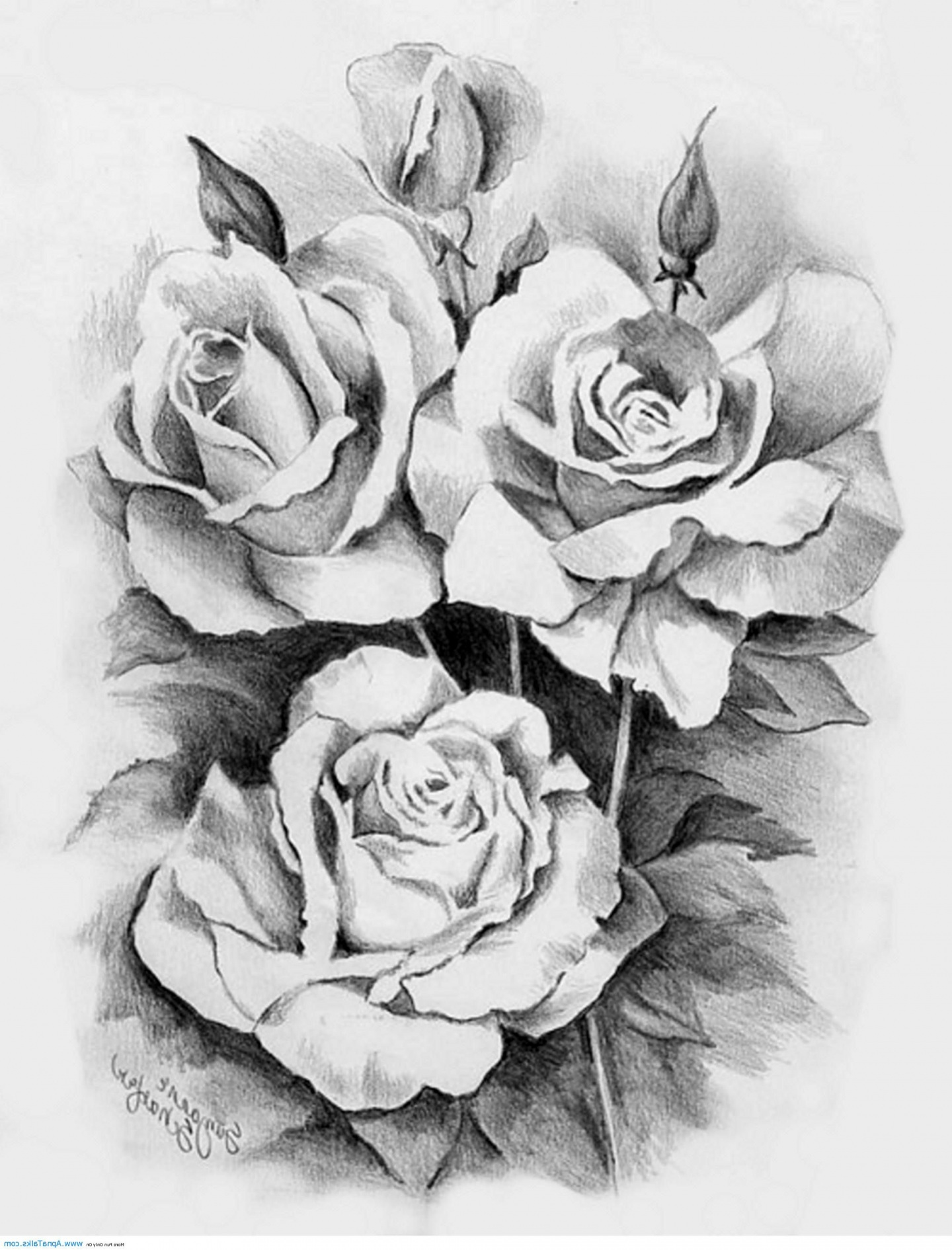 gaeroladid white rose tattoo drawing images. Black Bedroom Furniture Sets. Home Design Ideas