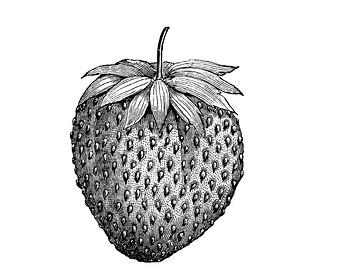 4 Amazing Strawberry Tattoo Designs And Ideas