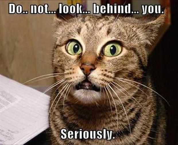 Not Funny Cat Meme : Do not look behind you seriously funny scared cat meme