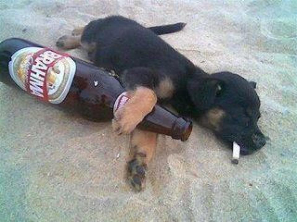 Funny Crazy Puppy Image
