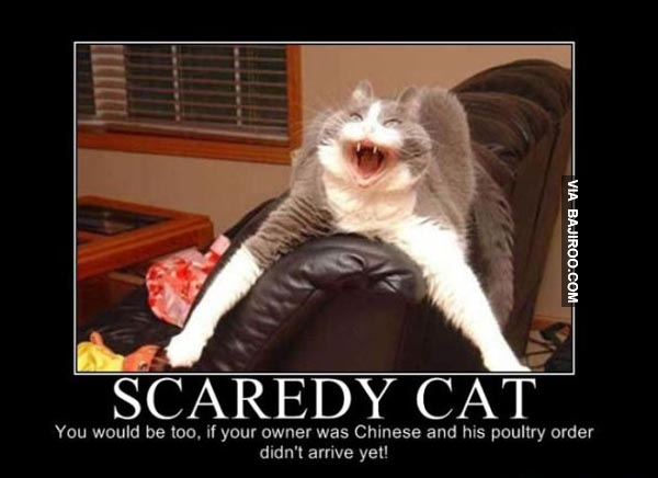 31 most funny scared pictures and images