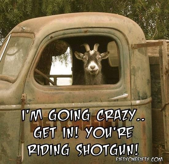 I Am Going Crazy Get In You Are Riding Shotgun Funny Picture