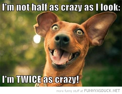 I Am Not Half As Crazy As I Look Funny Meme