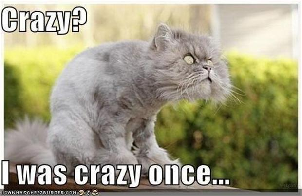 I Was Crazy Once Funny Cat Image