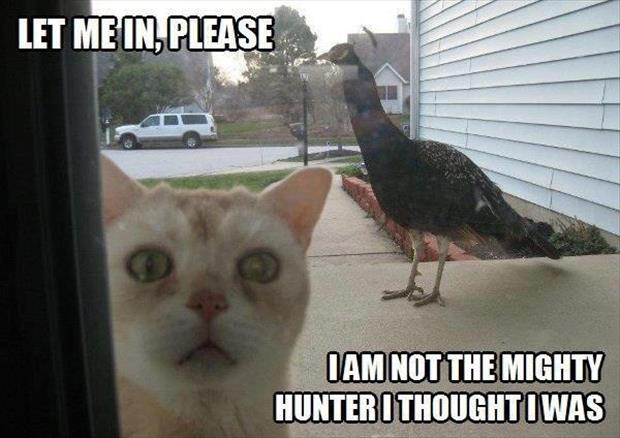 Not Funny Cat Meme : Let me in please i am not the might hunter i thought i was funny