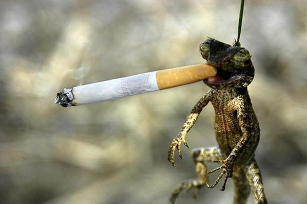 Lizard Smoking Funny Crazy Image