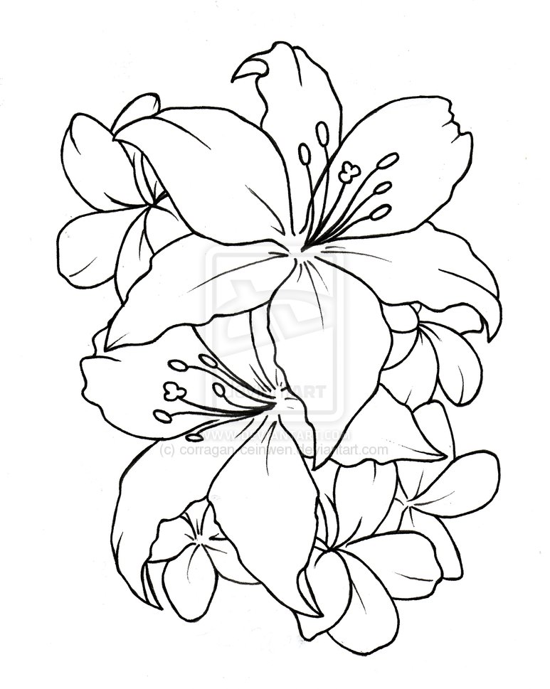 Hibiscus Tattoo Outline: 35 Flower Tattoo Design Samples And Ideas