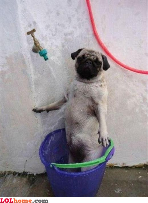 17 very funny shower pictures and photos