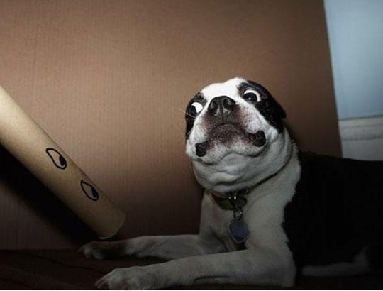 Funny dog faces memes - photo#40