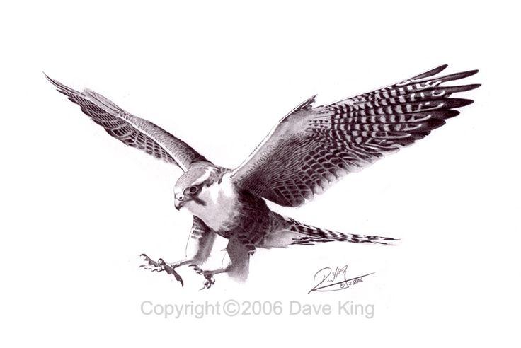 amazing black and grey flying falcon tattoo design by april curtis rh askideas com polish falcon tattoo designs falcon tattoo small