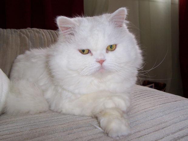 Persian cat baby names