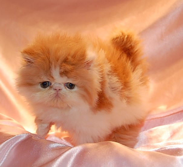 artic cat logo