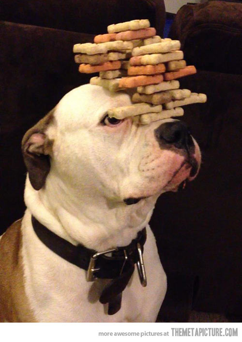 Dog Cookies Balance Funny Picture
