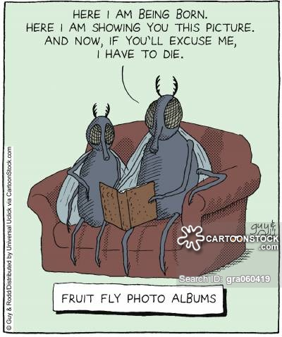 Flies Reading Book Funny Cartoon Image
