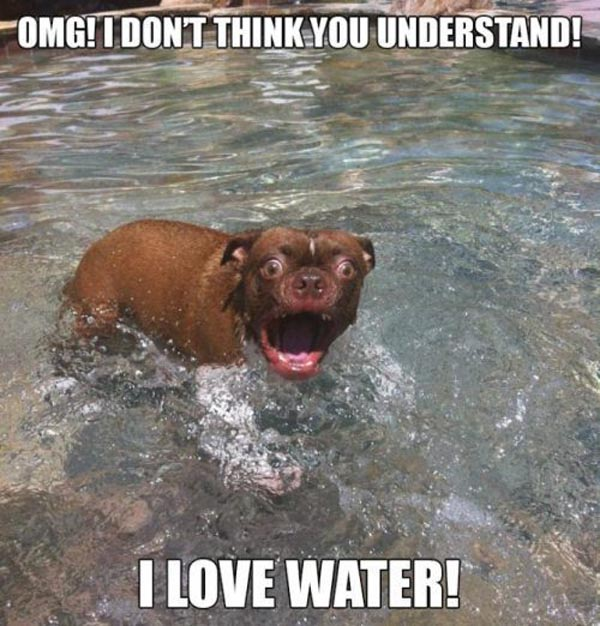 Funny Dog, Water Fail Image