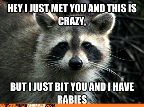 Hey I Just Met You And This Is Crazy Funny Animal Meme hey i just met you and this is crazy funny animal meme