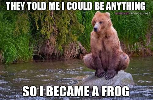 Funny Memes For Animals : Funny animal memes is hilariously inappropriate