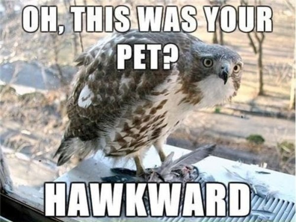Funny Memes Clean Animals : Most funny meme pictures