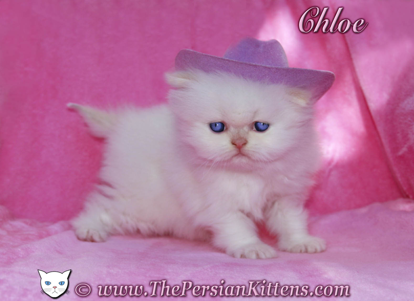 Beautiful persian cat names
