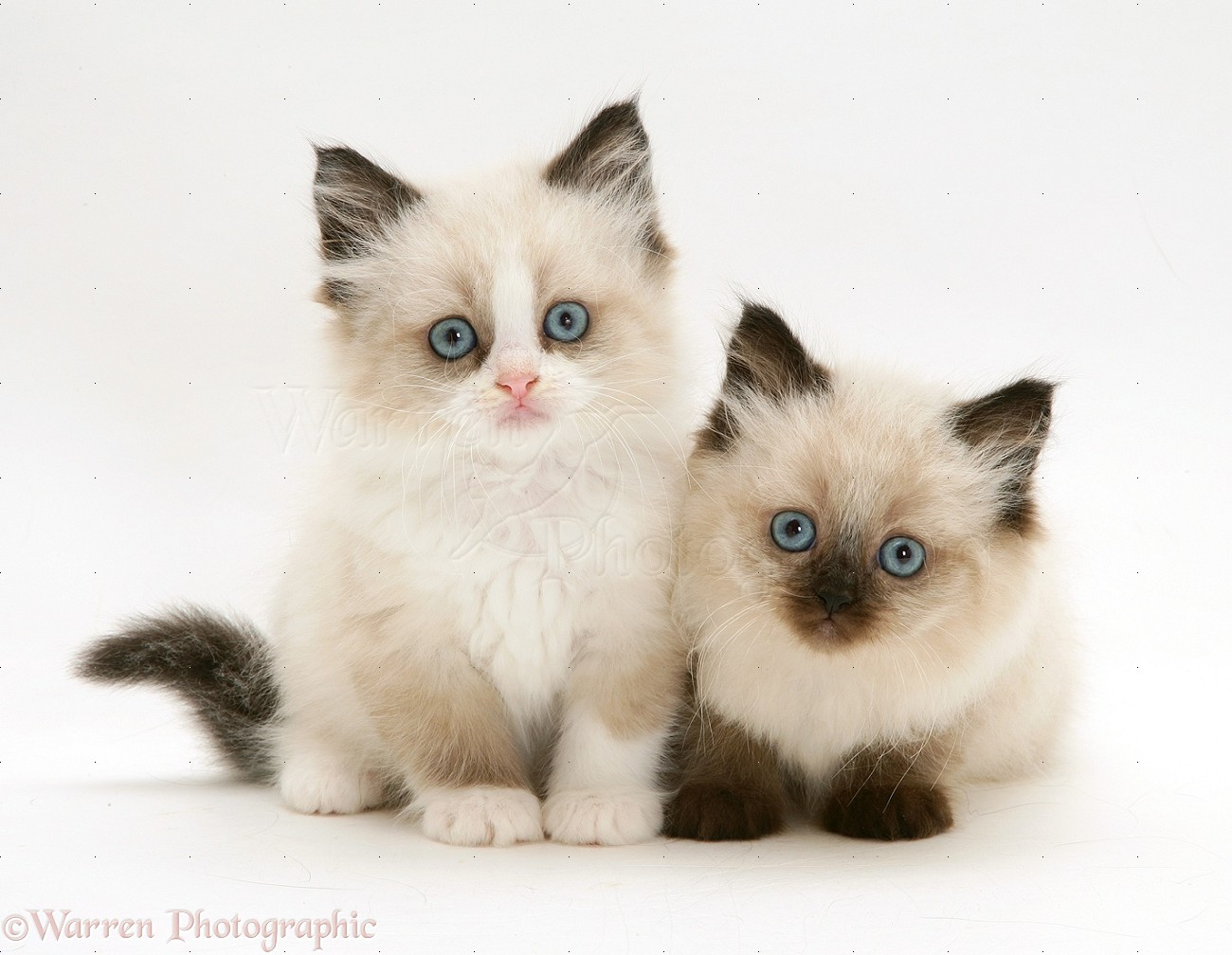 Cute Cat And Mouse Pictures
