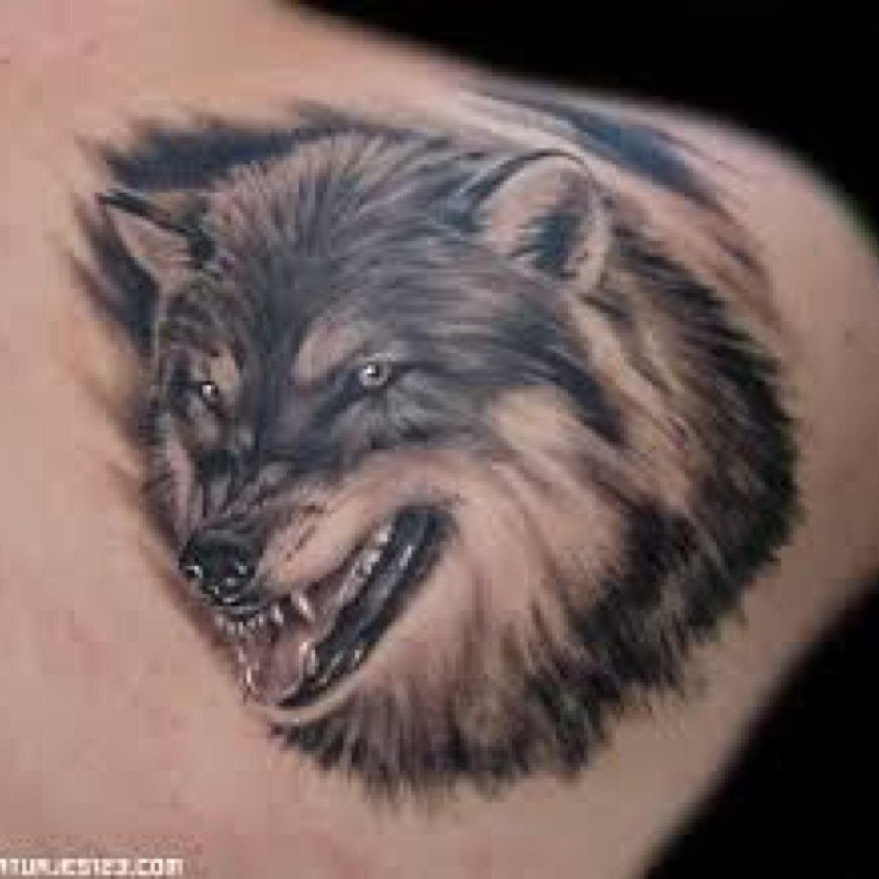 54623fd6042ce 20+ Traditional Wolf Tattoo Ideas, Designs And Images