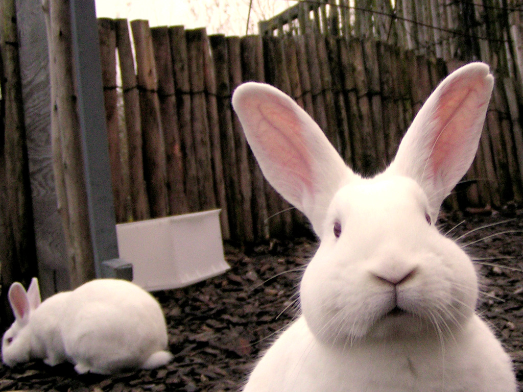 Funny rabbit funny rabbit pictures pictures of rabbits funny - Closeup Face Cute Rabbit Funny Picture