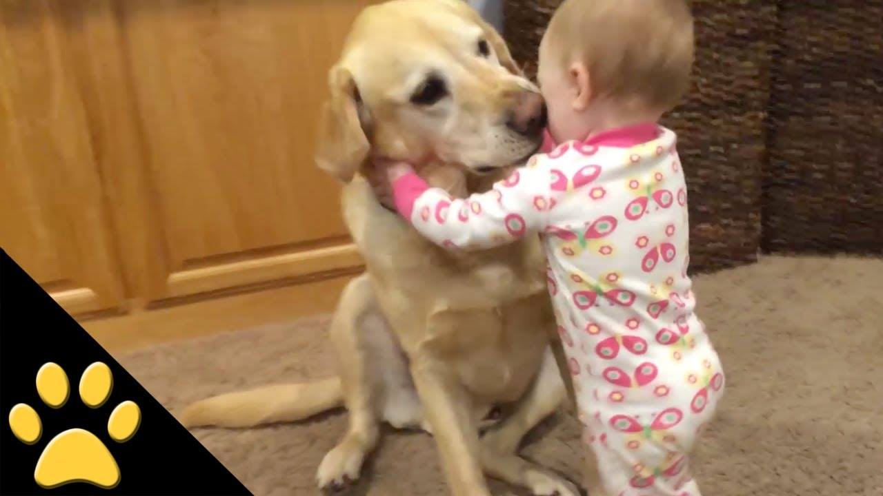 Cute Baby Bonding With Pet Dog Funny Gif Picture