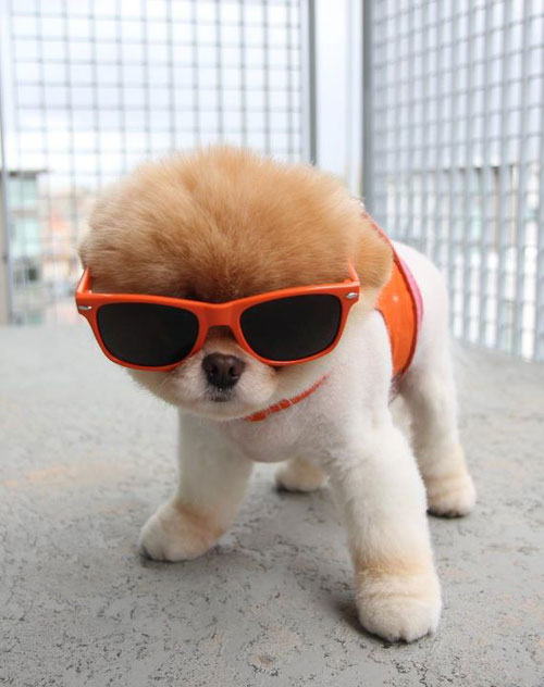 Funny-Cute-Dog-Puppy-With-Sunglasses.jpg