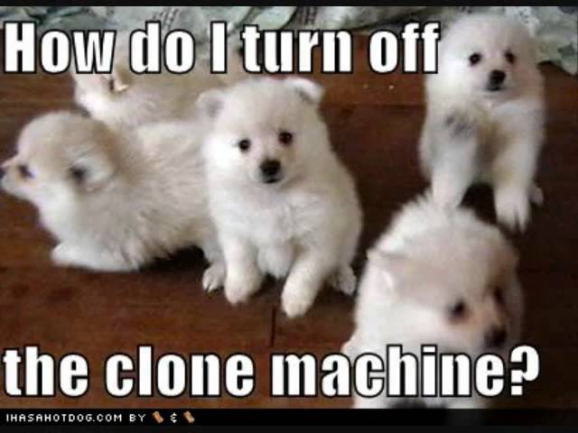 How do i turn off the clone machine funny cute puppies picture