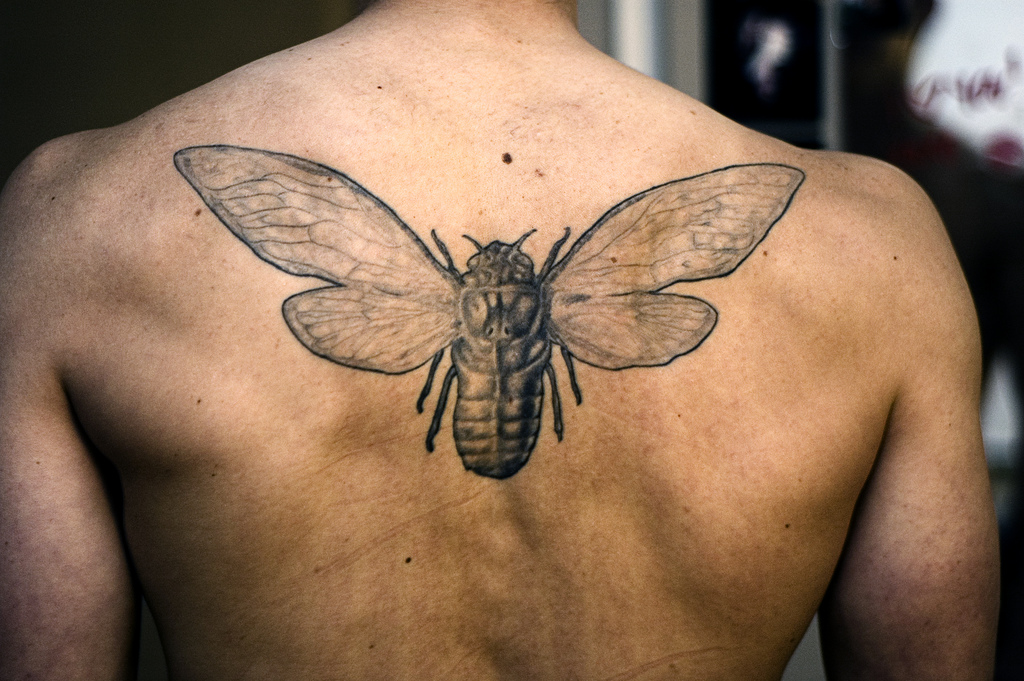 19 Bug Tattoo Images Pictures And Design Ideas