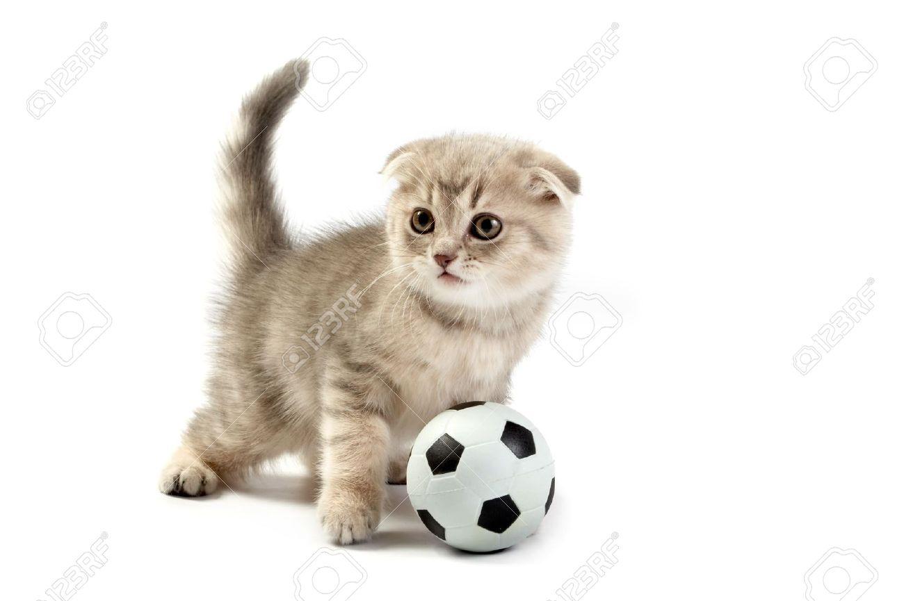 kitten food walmart