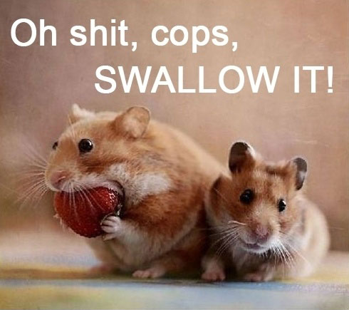 [Image: Funny-Hamsters-Eating-Strawberry.jpg]