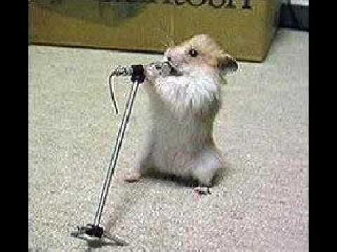 25 Very Funny Hamster Photos And Images
