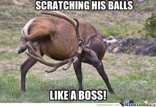 Funny Boss Man Meme : Very funny balls photos and pictures