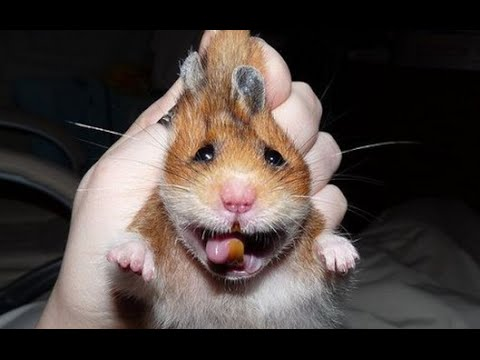 15 Most Funny Hamster Images And Photos