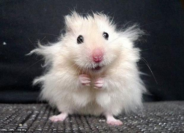 funny hamster pictures for kids - photo #16