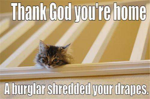 Funny Thank You Cat Memes : Most funny lol pictures and images