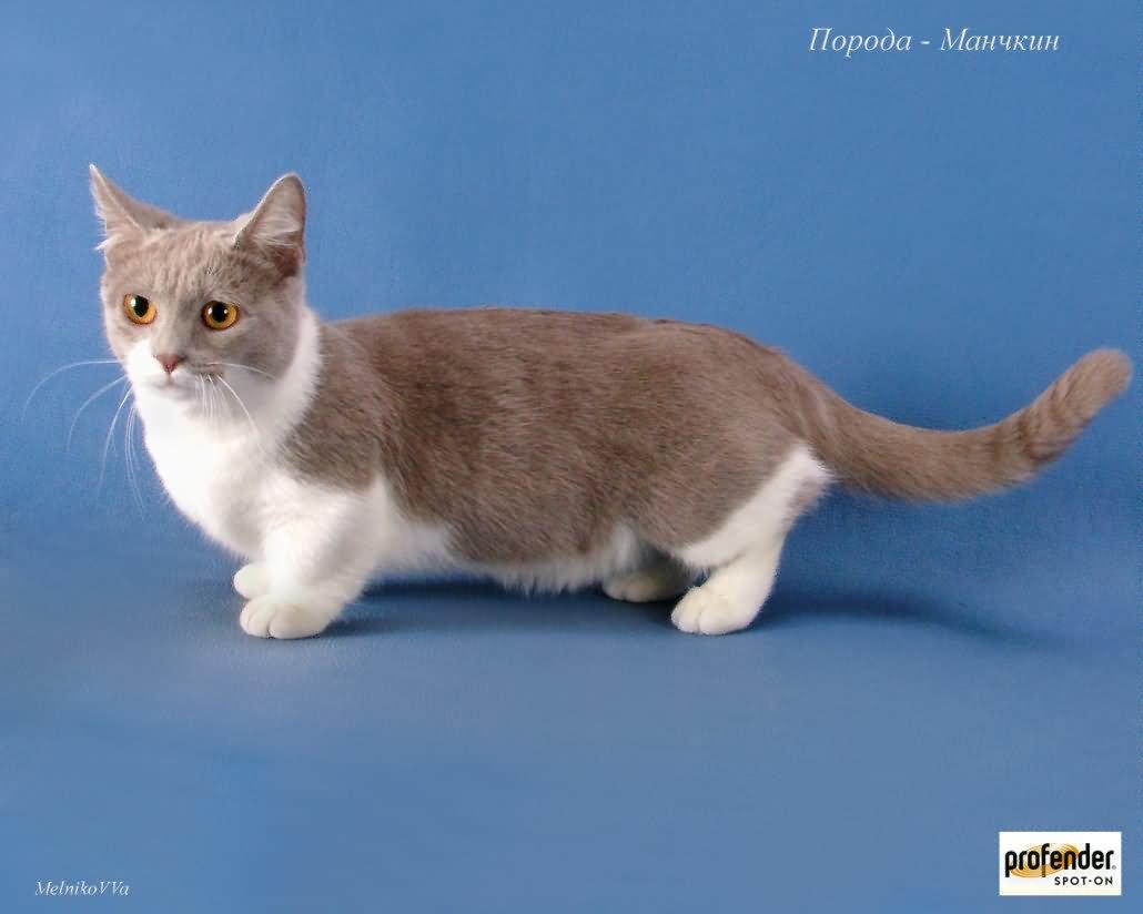 can fleas cause diarrhea in cats
