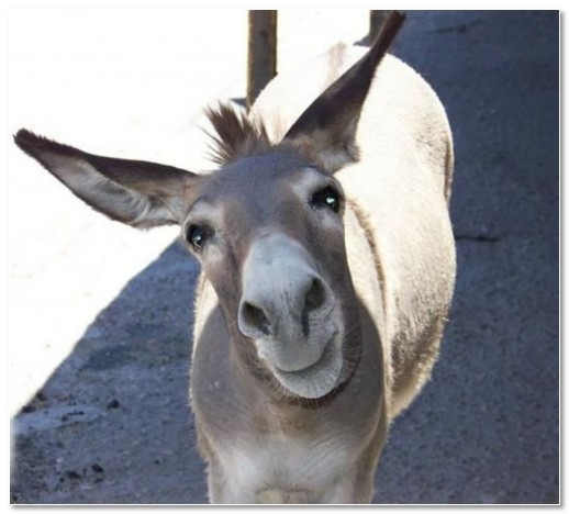 funny donkey faces - photo #16
