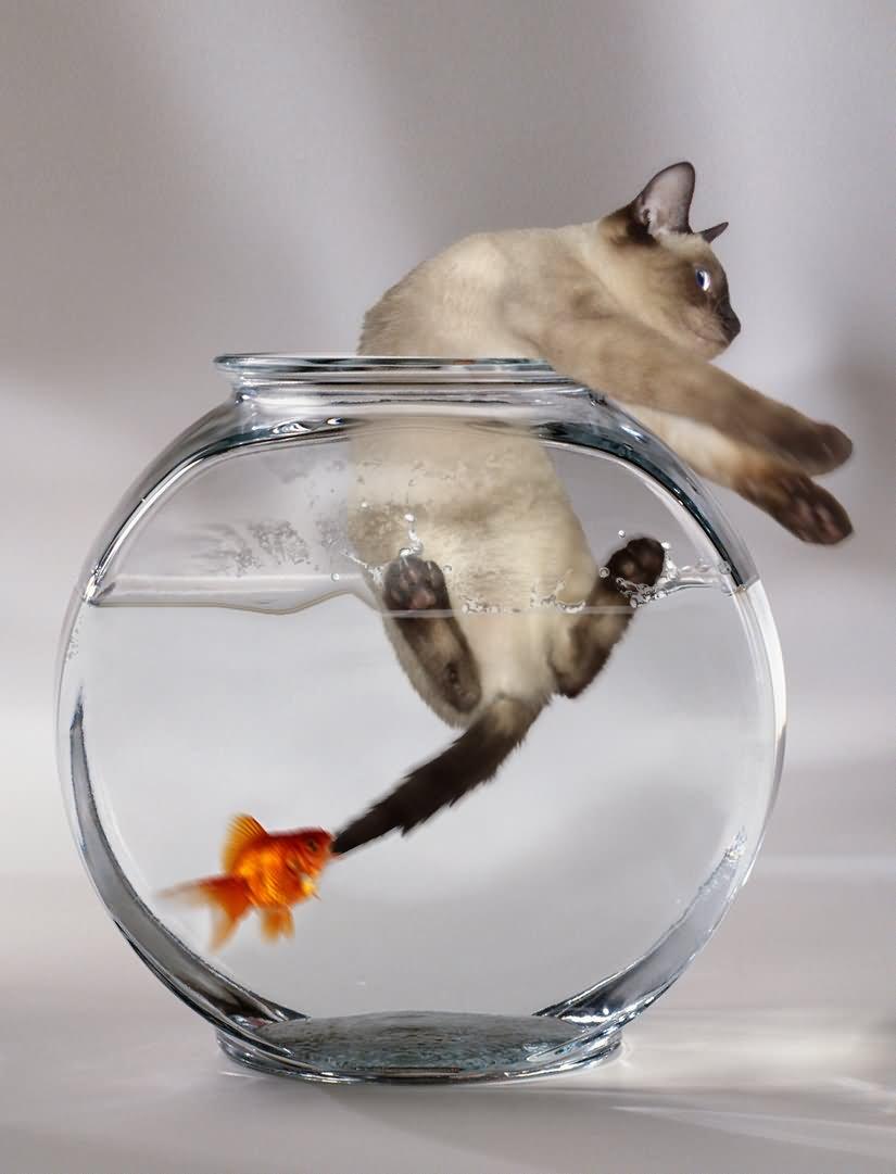 счастливо женат кот-рыбы мужчина ноябрь 2015 если цвет
