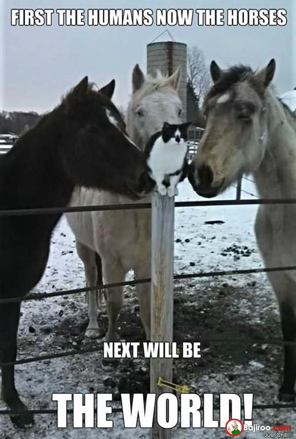Funny Sad Horses And Cat Meme Picture